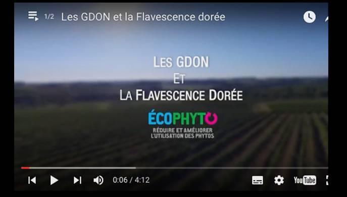 GDON – Flavescence Dorée
